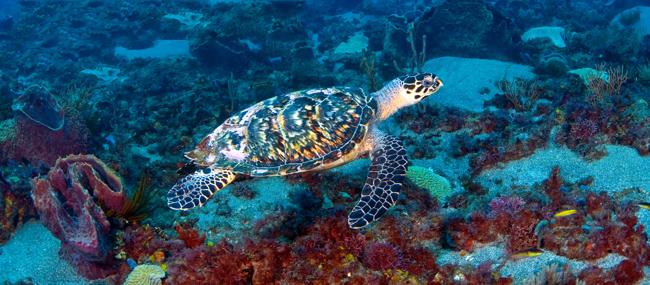 Scuba St Lucia - Shore Dives UW