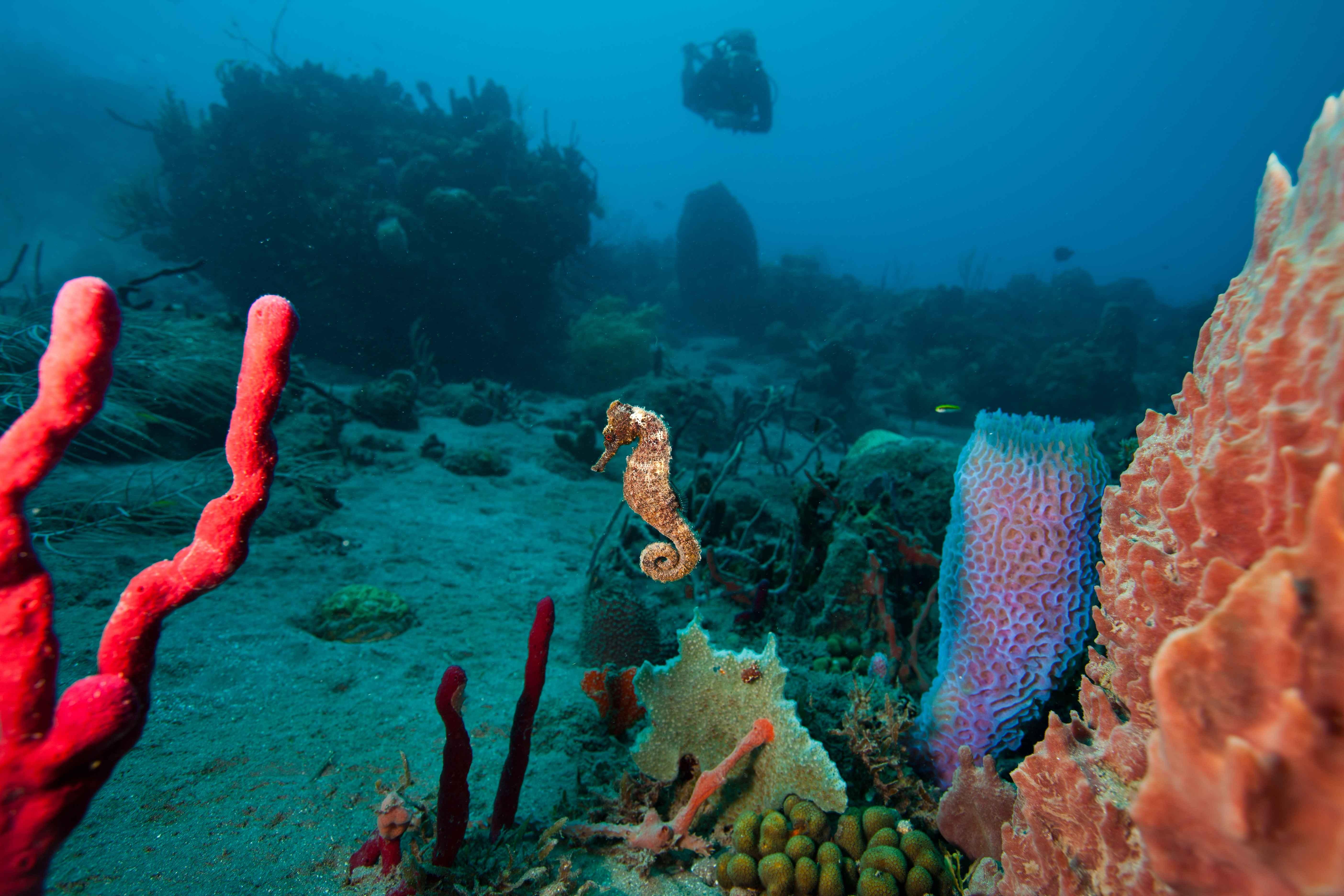 Sea Saba - UW
